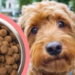 Best Dog Food For Goldendoodle