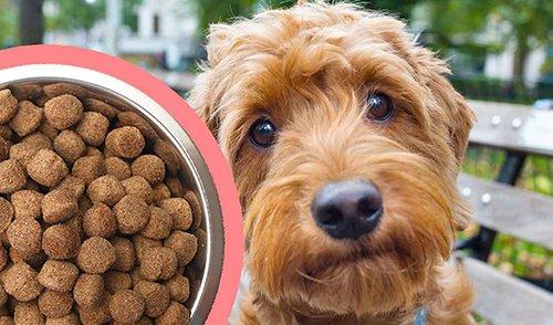 Best Dog Food For Goldendoodle