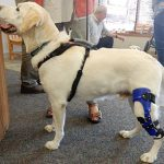 Best Dog Knee Brace For Luxating Patella