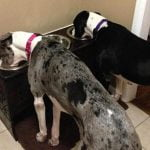 Best Elevated Dog Bowls For Great Danes Reviews
