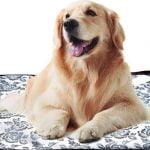 Best Heating Pad For Dogs With Arthritis