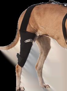Canine Knee Brace