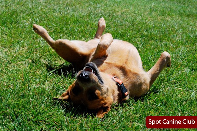 Home Remedies For Dog Skin Allergies Itching