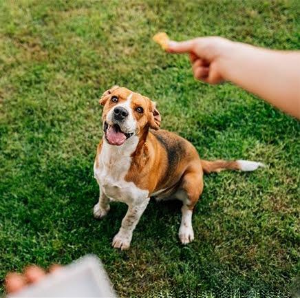 Homemade Dog Training Treats