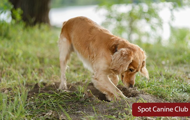 How to Stop a Dog From Digging Up