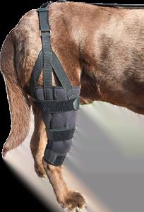 Labra Dog Canine K9 Knee Stifle Brace