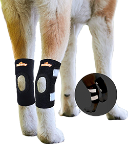 NeoAlly Dog Braces