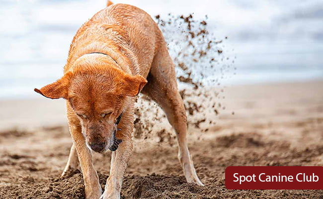 stop dog from digging and escaping