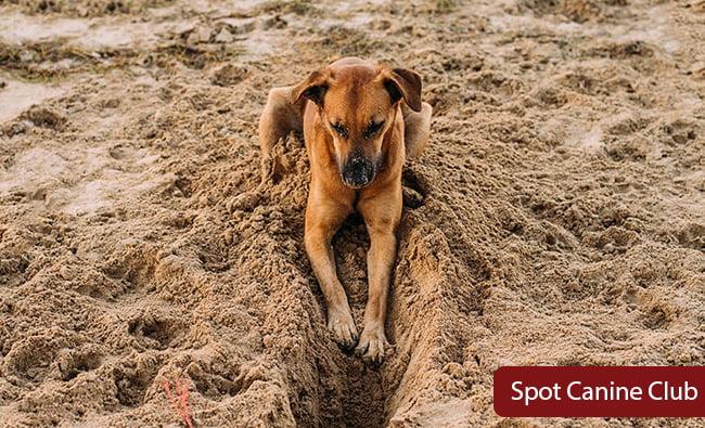 why my dog digging