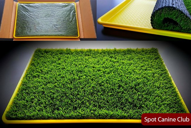 Best Artificial Grass For Dog Potty