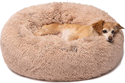 Friends Forever Donut Cat Bed