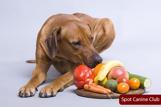 dog eating vegetable fruits