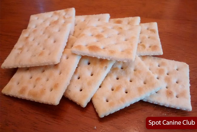 Are Dogs Eat Saltine Crackers