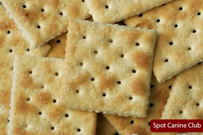 Can Dogs Have Saltine Crackers