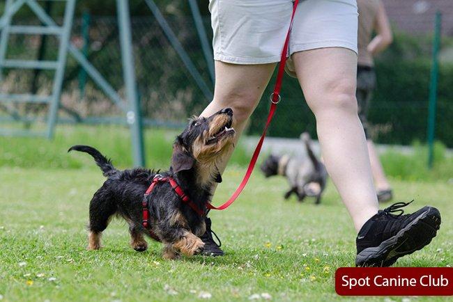 Most leash reactive dog breeds
