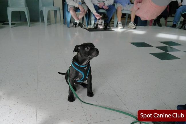 Reactive Dog Training