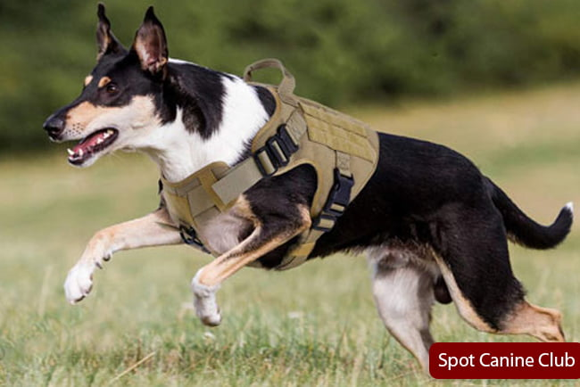 Dog Harness to Attach Gear Toys