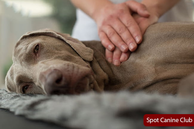 How to relieve dog gas pain