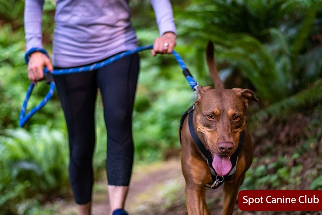 Should You Feed Your Dog Before or After a Walk