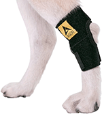 AGON Dog Canine Rear Hock Joint Brace Compression Wrap