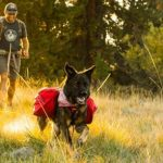 Best Tents For Camping With Dogs Reviews 2022 (Latest Buying Guide)