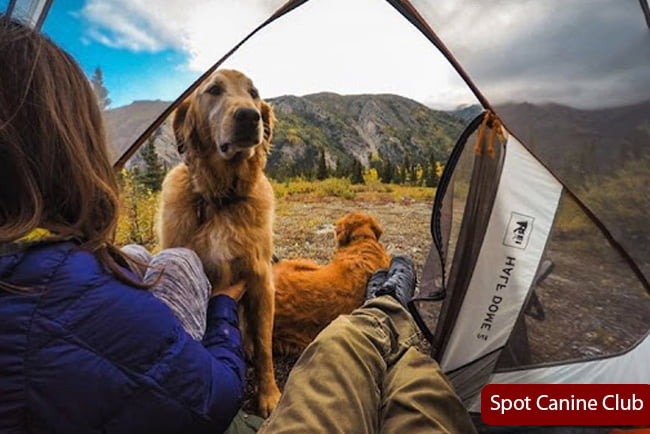 Best Tents For Camping With Dogs Reviews