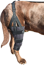 Labra Dog Canine K9 Knee Stifle Brace Wrap Metal Hinged