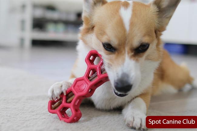 Dog Swallowed Bully Stick