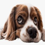 Why Is My Dog Acting Weird All of a Sudden | Possible Reasons